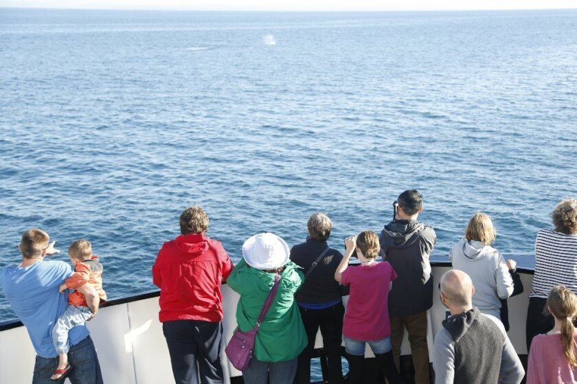 Whale watchers on board Flagship Cruises' Marrieta observe a plume from a gray whale off the coast of San Diego. The tour was done by Birch Aquarium at Scripps.