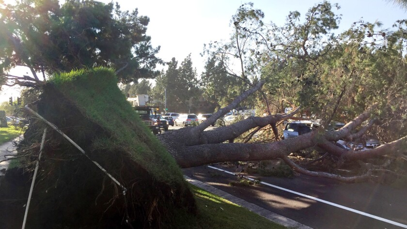 A large tree blocks the road after falling on a vehicle in Irvine on Monday morning as powerful Santa Ana winds ravaged the area.