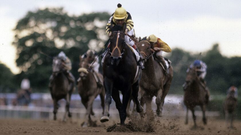 ELMONT, NY - JUNE 13, 1977: Jockey Jean Grugent sits atop of Seattle Slew (5) racing to win the Trip