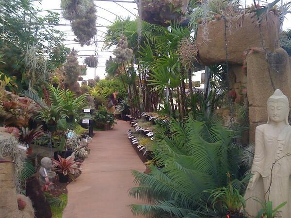 Nursery Tour Rainforest Flora In Torrance Los Angeles Times