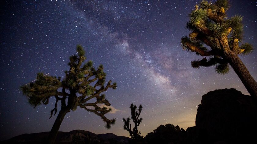 JOSHUA TREE, CALIF. -- WEDNESDAY, JULY 26, 2017: A view of the Milky Way arching over Joshua Trees a