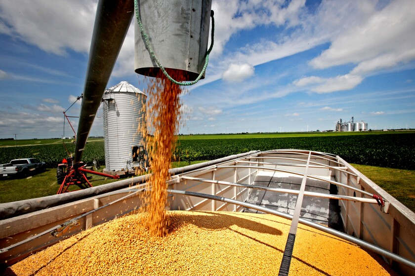 Soybeans being loaded from a grain bin onto a truck in Illinois