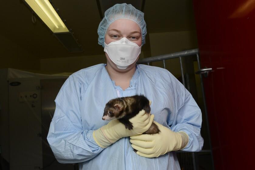 Virus Outbreak Vaccines Animals