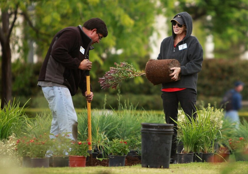 Volunteer master gardeners Paul Palacios and Debbie Handal help plant drought-tolerant plants for the Adopt-a-Plot program at Balboa Park..