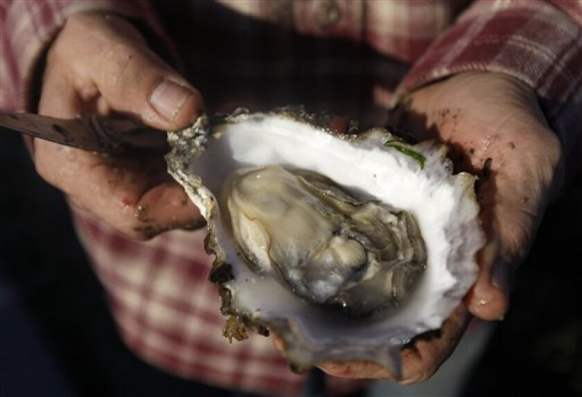 File art of a Pacific oyster. The salty shellfish are at risk from changes to ocean acidity and oxygen levels caused by climate change. Because of circulation patters in the Pacific, the West Coast faces more severe disruption.