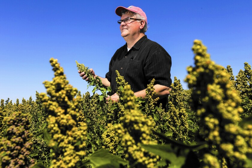 Bryce Lundberg of Lundberg Family Farms stands in a quinoa field in Brawley, California.
