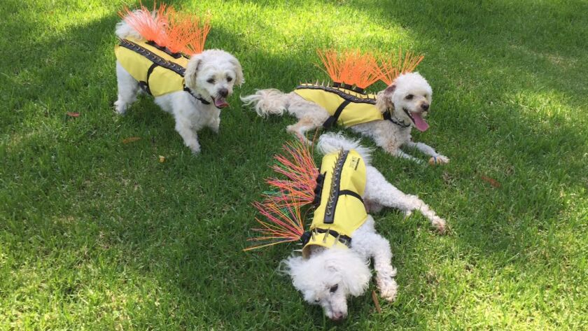 Sparky, Cody and Scooter model the Coyote Vest.