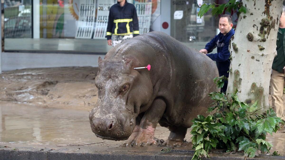 Mueren Varios Animales Del Zoo Tras Inundación En Georgia