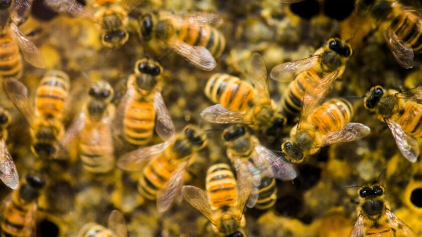 Seeds coated with pesticides linked to honey bee deaths are exempt from federal rules