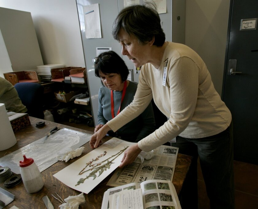 Judy Gibson, curator of botanical collections at the San Diego Natural History Museum (right), worked with volunteer Mary Ellen Walther on a plant sample at the San Diego Natural History Museum. Peggy Peattie / Union-Tribune photos