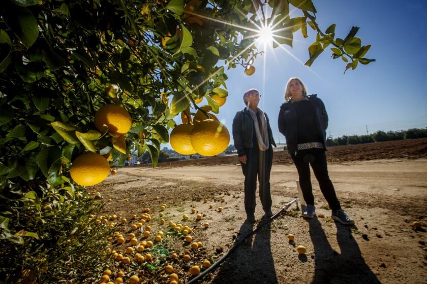 UC Riverside's Givaudan Citrus Variety Collection
