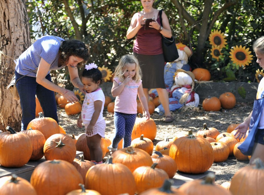 Environmental Nature Center, Newport Beach held it's annual Fall Faire and Pumpkin Patch Sunday, Oct