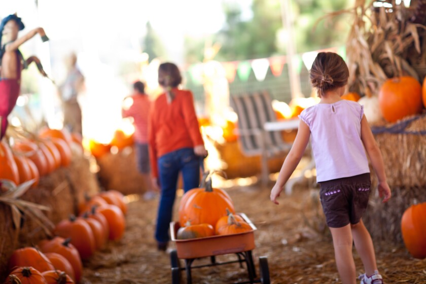 OB Heights Harvest Festival 5-8 p.m. Friday, Oct. 18, 1499 Venice St. Food, ponies, petting zoo, laser tag, Famous Haunted Hallway (Scary Hour, 7-8 p.m.), cake walk, bake sale, arts & crafts, face painting, slime booth, spin art, dunk tank, 25 games for all ages. Free. Activities pay-as-you-go, many games $1. (619) 599-3008 or elissahoehn@gmail.com