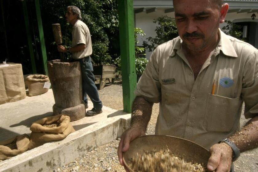 La Asociación de Agricultores de Puerto Rico, a través de su presidente Héctor Iván Cordero, solicitó recientemente al secretario de Agricultura Federal (USDA, por sus siglas en inglés), Sonny Perdue, fondos para restablecer los cafetales de la isla tras los huracanes Irma y María. EFE/ARCHIVO