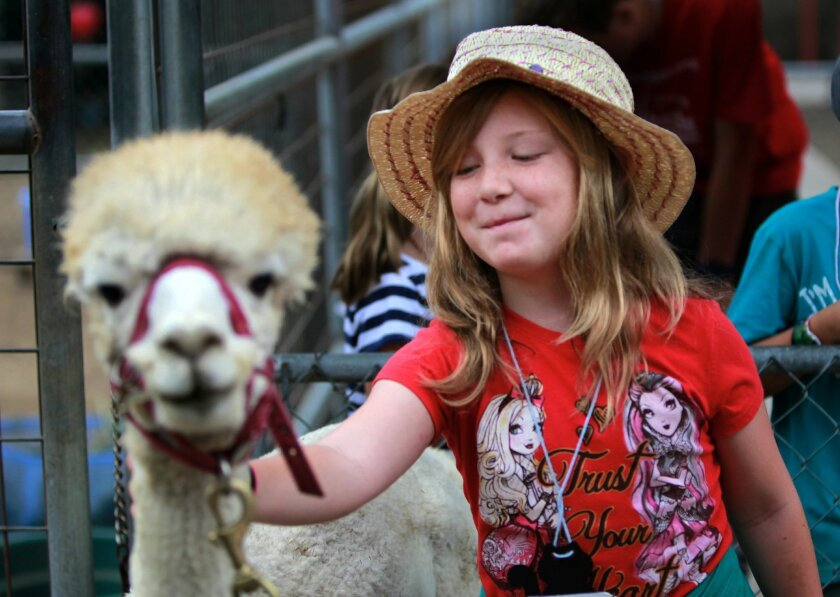 Grace Kazanjian, 7, pets Kronk, an Alpaca from The Helen Woodward Animal Shelter on Wednesday during Critter Camp.