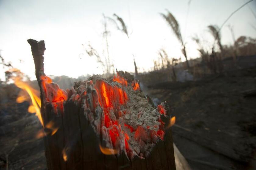 Vista de un tronco en llamas en Porto Velho (Brasil). EFE/Joédson Alves