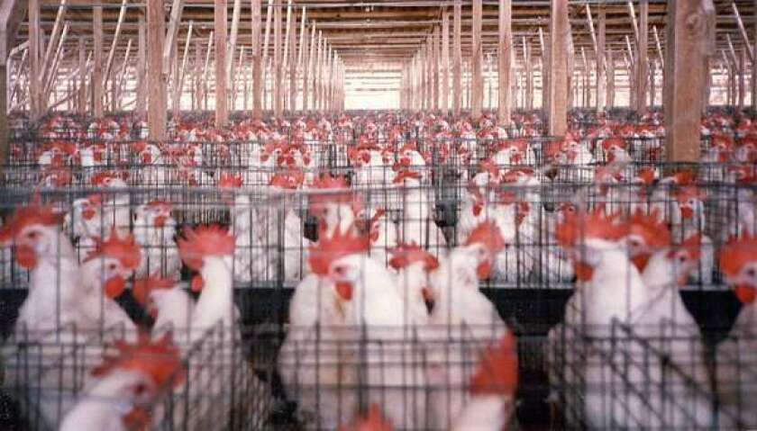 Farm bill should make more room for hens across the country