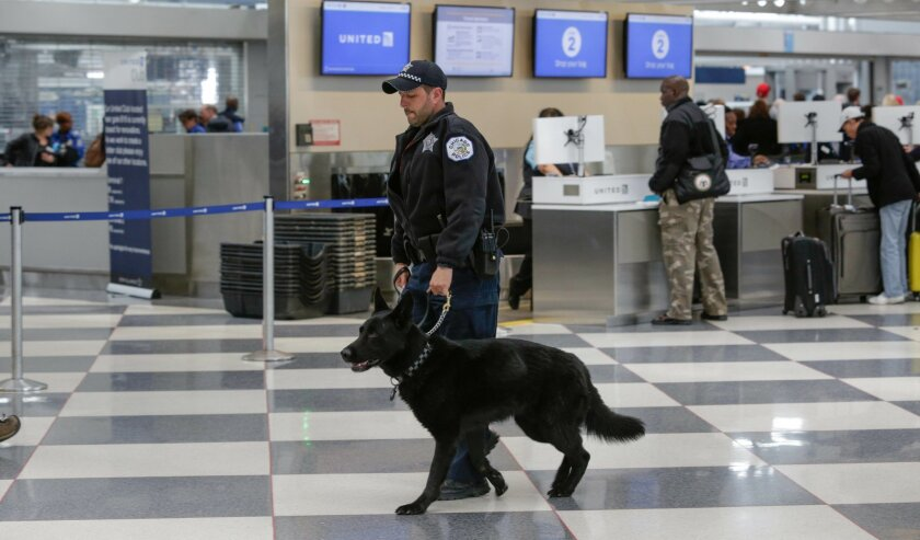 A K9 security officer and his dog walk through a terminal at O'Hare International Airport on Tuesday, March 22, 2016 in Chicago. The airport attack in Brussels highlights one of the most vulnerable stages of aviation security: the time travelers spend between the curb and the checkpoint. (AP Photo/Teresa Crawford)