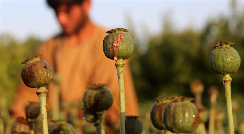 Nueva York se unió hoy a la extensa lista de ciudades, condados y estados del país que han demandado a farmacéuticas y distribuidores por su supuesta responsabilidad por el aumento en adicciones y muertes por opiáceos. EFE/Archivo