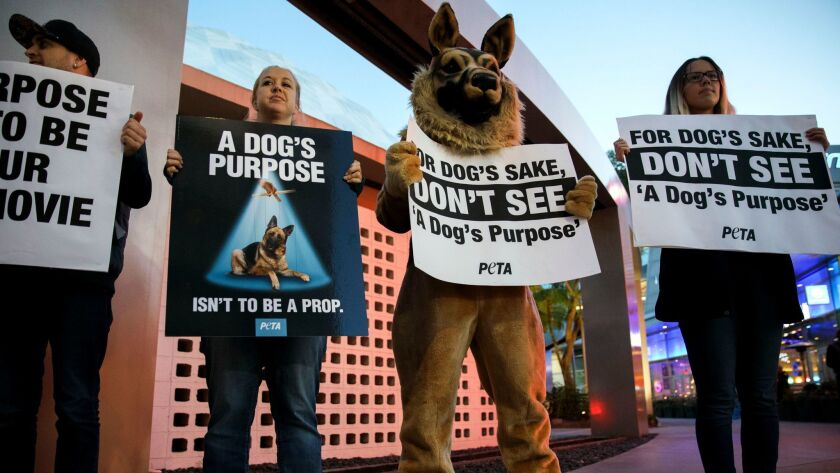 "People hold signs during a PETA protest of ""A Dog's Purpose"" in front of the ArcLight theater in Hollywood. PETA called for a boycott of the film, alleging animal abuse after a video distributed by TMZ showed a German shepherd being forced into a pool of turbulent water."
