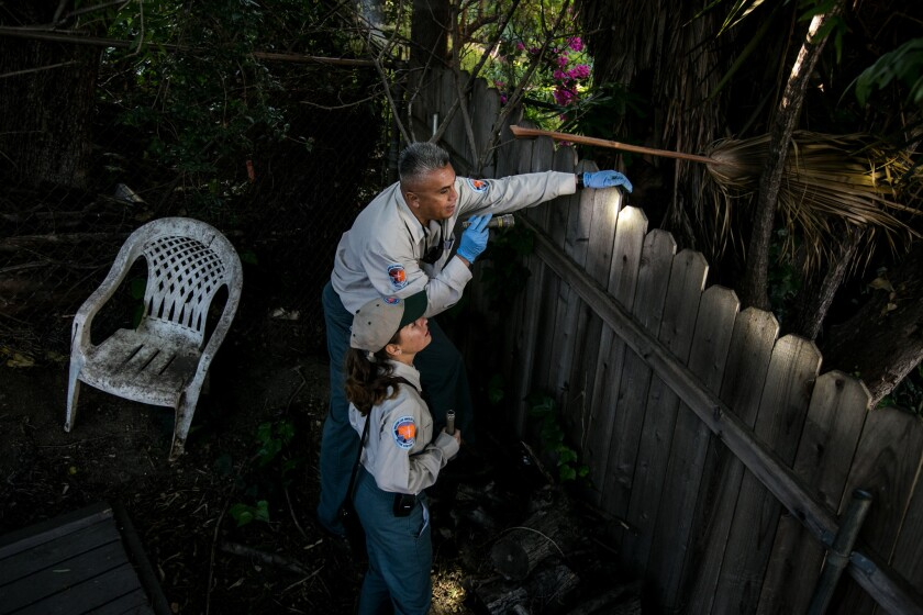 Vector control specialists Yessenia Avilez, bottom, and Randy Garcia spot an adult Aedes albopictus mosquito, also known as the Asian tiger mosquito, in a residential backyard in Silver Lake.