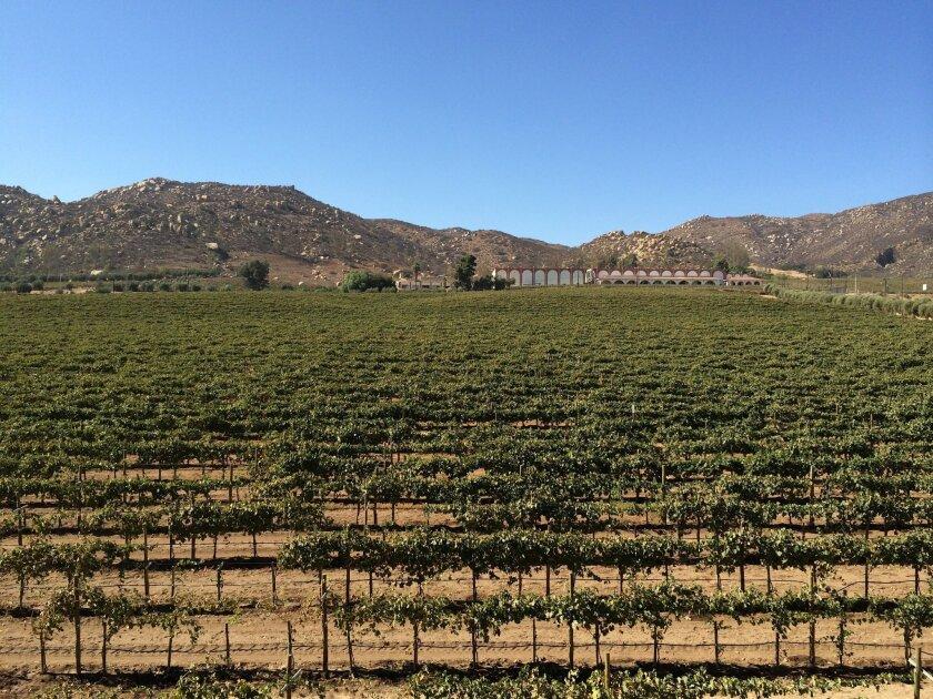 Vineyards in Baja's Valle de Guadalupe.