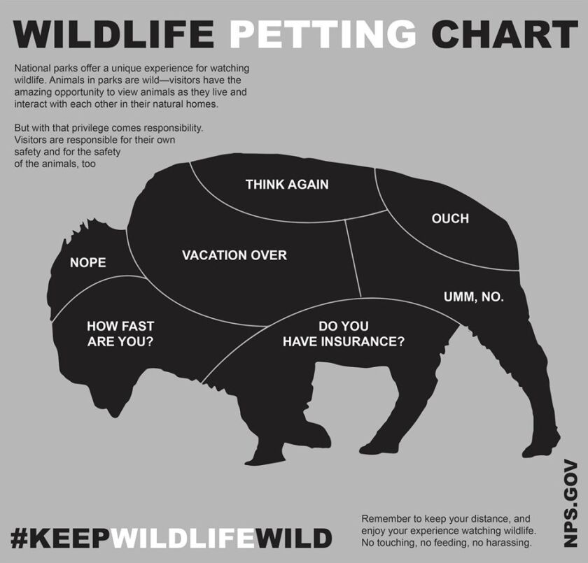 How close should you get to bison in the wild? Not very, says this humorous National Park Service graphic.