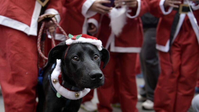 GREECE-CHRISTMAS-SANTA-RUN