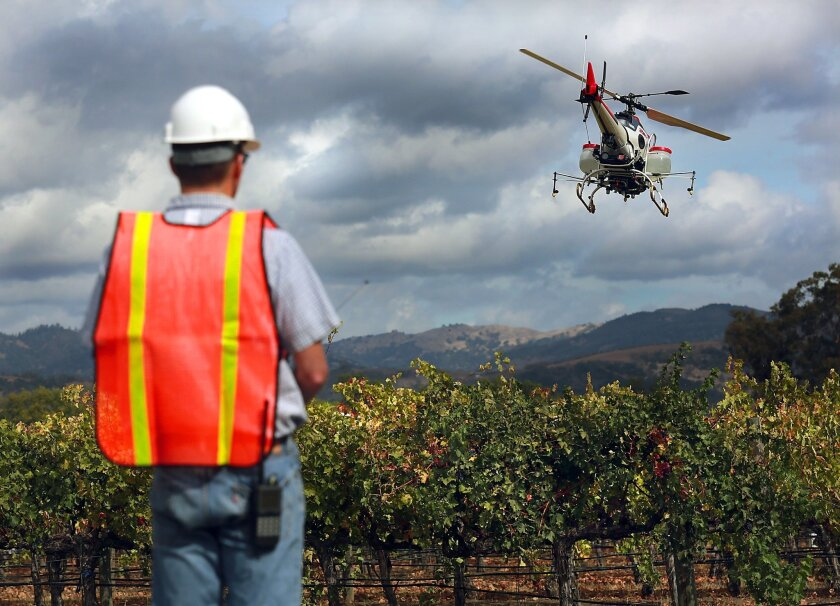In this Oct. 15, 2014 photo, UC Davis engineer Ryan Billing flies a Yamaha RMax helicopter over the Oakville Station test vineyard to demonstrate the use of the drone applying fertilizers and pesticides to vineyards t the University of California, Davis' Oakville Station test vineyard in Oakville,
