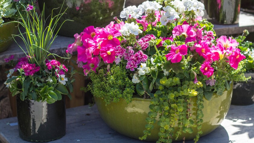 Containers are an easy way to get in some gardening.