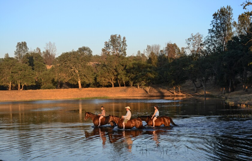Horses and their riders cool off in a lake at the V6 Ranch in Parkfield, Calif.