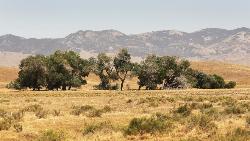 """Grasslands on Tejon Ranch could be developed under the proposed Centennial Project, set to be heard by the L.A. County Board of Supervisors on Dec. 11. The site sits in """"high"""" and """"very high"""" fire hazard zones as designated by the state."""