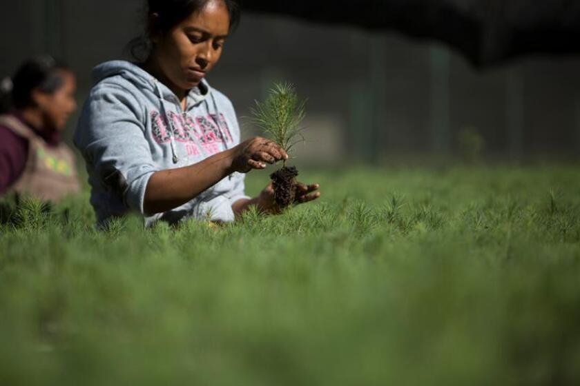 Mujeres en México sufren desigualdad en el manejo de los recursos forestales