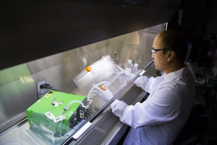 Lo Vang, senior scientist at PaxVax, developer of vaccines, works with modified lung cancer cells as part of the ongoing development of several vaccines. PaxVax is also working on a vaccine for the Zika virus, which most of the time is spread to people through mosquito bites.
