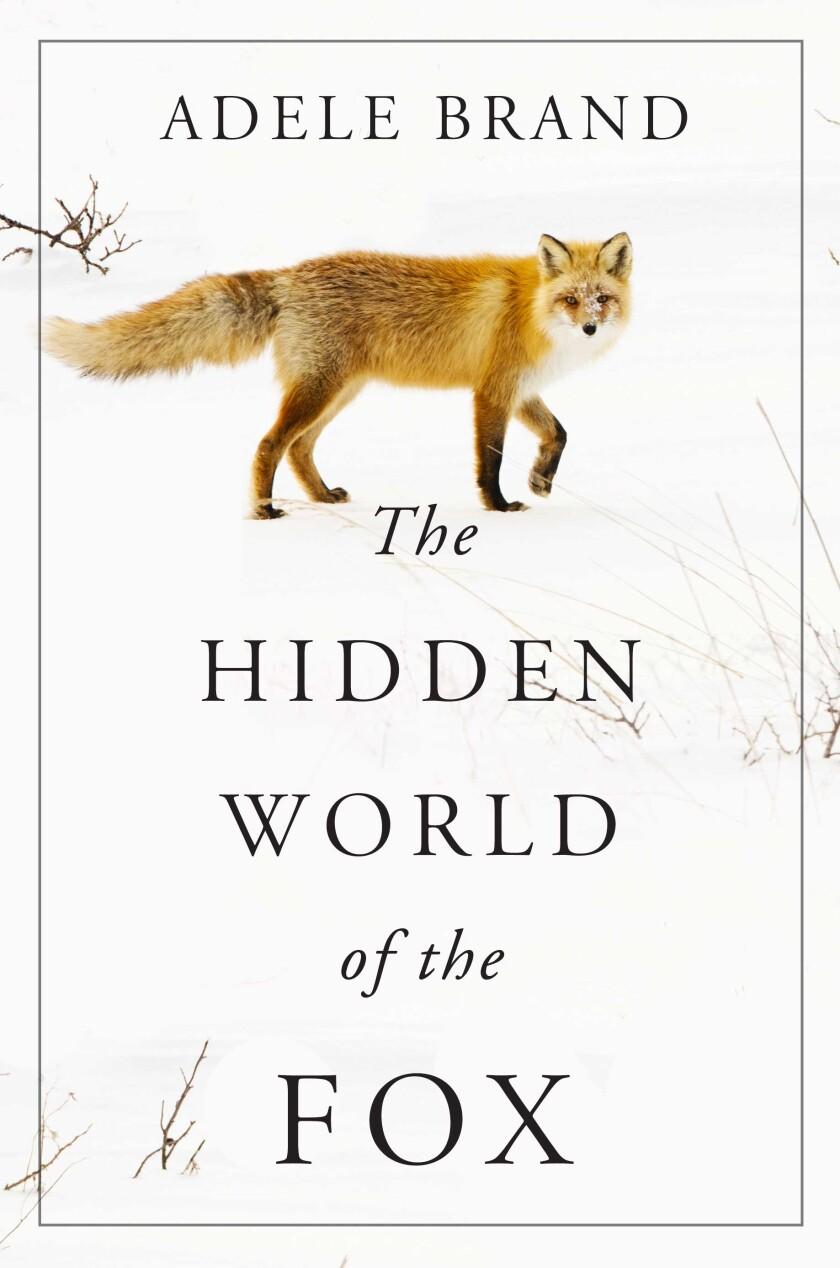la_ca_the_hidden_world_of_the_fox_21_nature_books_371.JPG