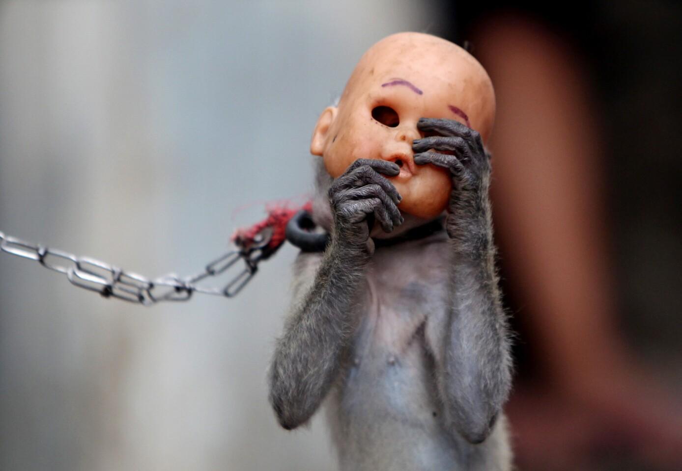 A street monkey wears a doll mask as it performs in a slum in Jakarta, Indonesia.