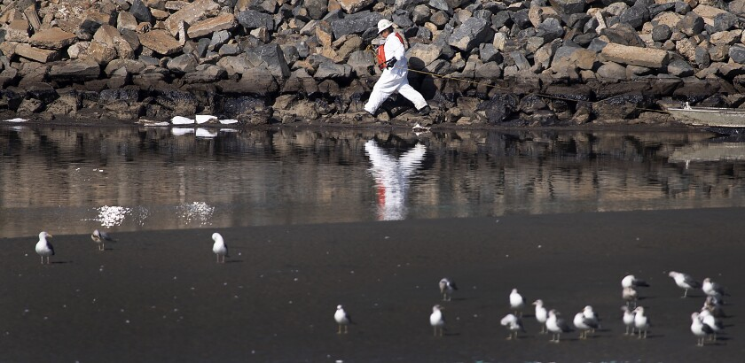 A worker cleans up Talbert Marsh as a major oil spill washes ashore in Huntington Beach.