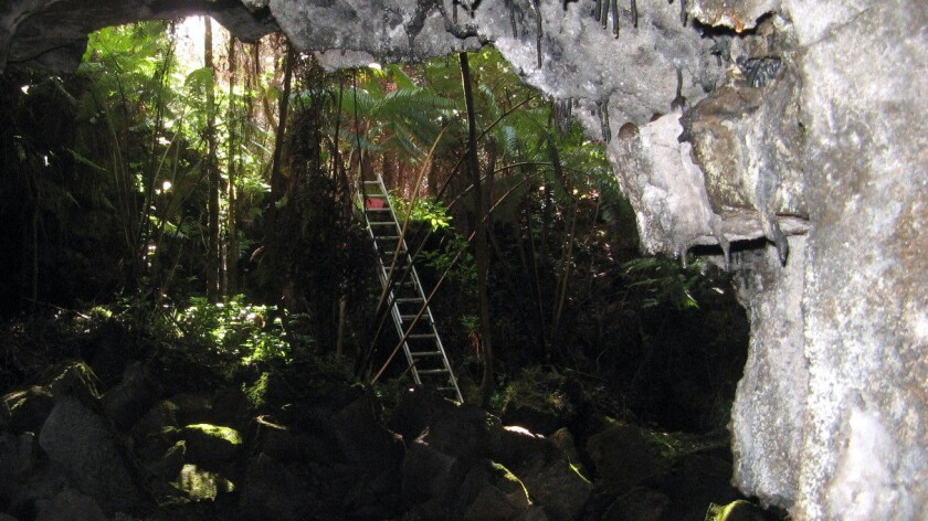 Deep within a rain forest, visitors use a 15-foot ladder to descend into the Puapoo lava tube formed by eruptions of the Kilauea volcano. Weekly hikes are being offered through the end of 2016.