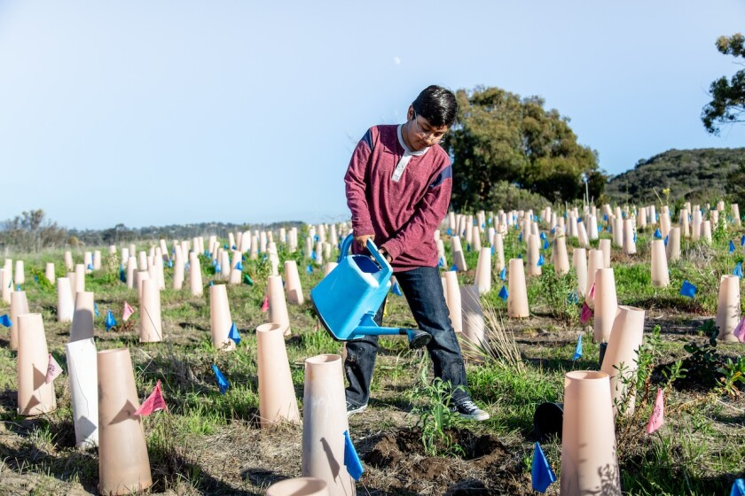 A Nature Collective volunteer waters new native plants at San Elijo Lagoon.
