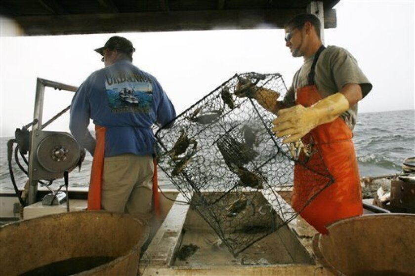 FILE - In this June 23, 2008, file photo waterman Paul Kellam, left, hands crab pots for shaking to Randy Plummer while crabbing in Ridge, Md. Competition is tough when it comes to the canned blue crab, which is one reason Maryland fisheries officials hope to set their catch apart by touting the state's sustainable fishing methods. (AP Photo/Jacquelyn Martin, File)