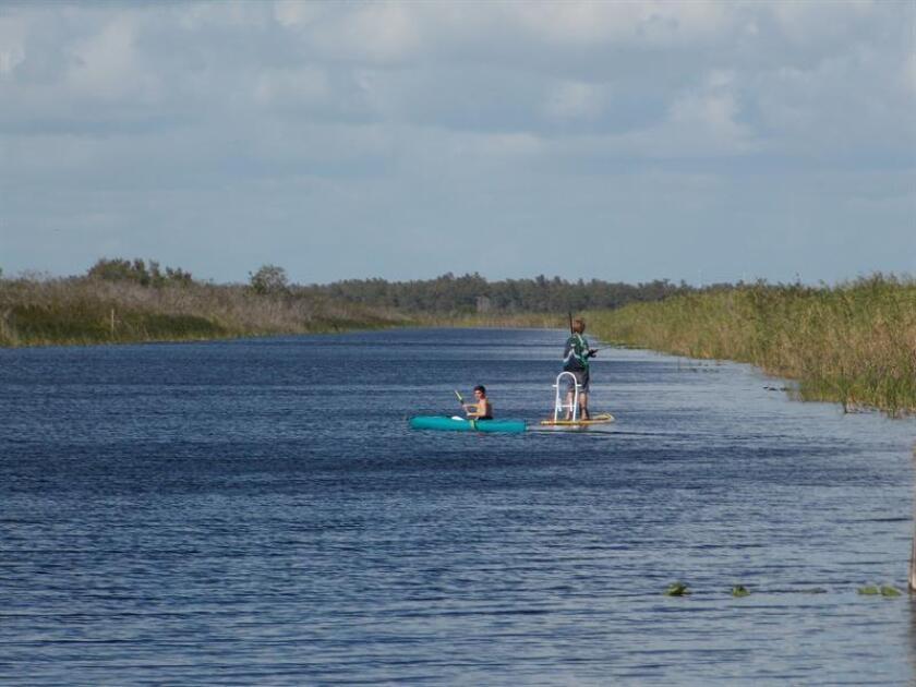 Dos personas pescan en la Reserva Nacional de Vida Salvaje de Loxahatchee, una de las joyas del ecosistema de los Everglades en Florida, que puede desaparecer si queda sin efecto un acuerdo entre organismos estatales, lo que beneficiaría los intereses de la industria azucarera en la zona, según advirtió la organización ambientalista Audubon. EFE/Archivo