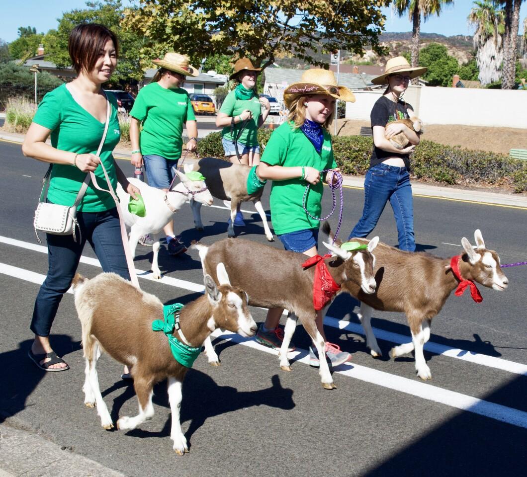 poway parade goats.jpg