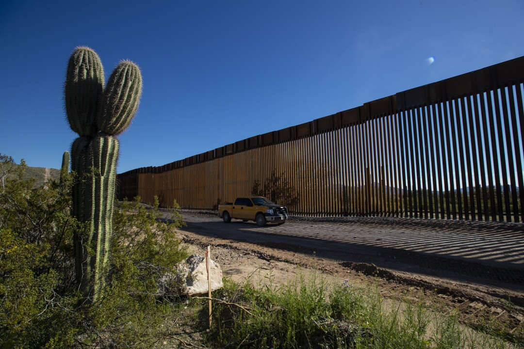 Saguaro cactus grows along Puerto Blanco Drive as crews work to construct a new 35-foot border wall and widen the road to 60 feet in Organ Pipe Cactus National Monument in Arizona.