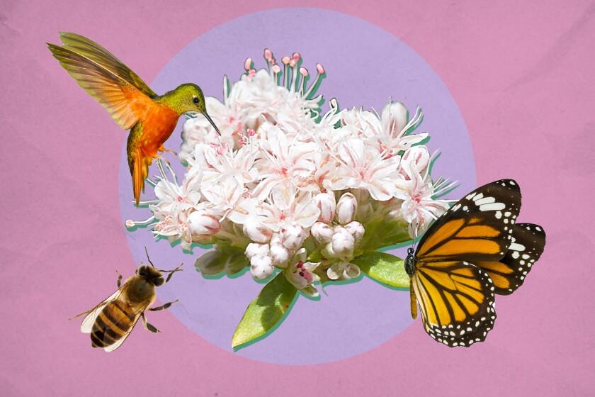 Native plants attract pollinators.