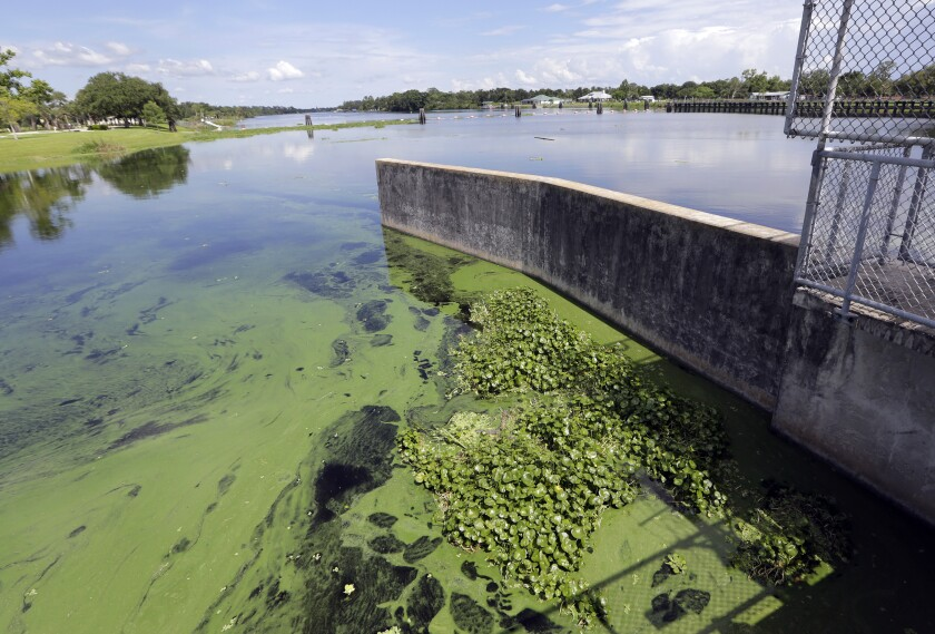 FILE - In this Thursday, July 12, 2018 file photo, an algae bloom appears on the Caloosahatchee River at the W.P. Franklin Lock and Dam in Alva, Fla. A study released on Wednesday, Jan. 6, 2021, shows America's rivers are changing color, mostly because of what people are doing. (AP Photo/Lynne Sladky)