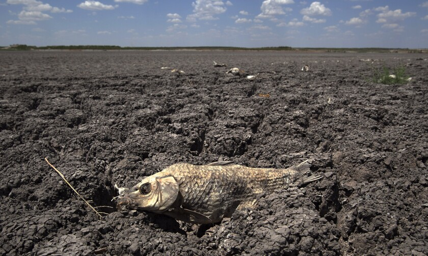 A dead fish lies in a dry lake bed