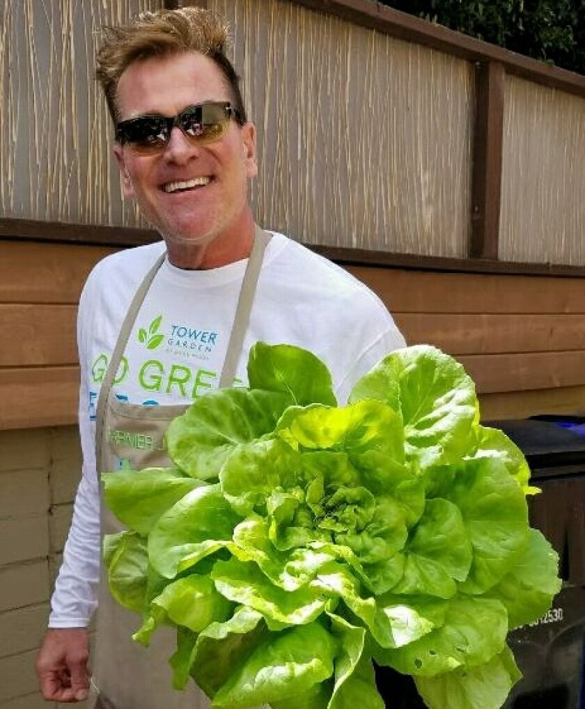 Joe Wesley grows butter lettuce in vertical towers on the roof of his home in University Heights.