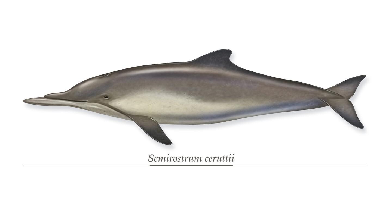Underbite porpoise