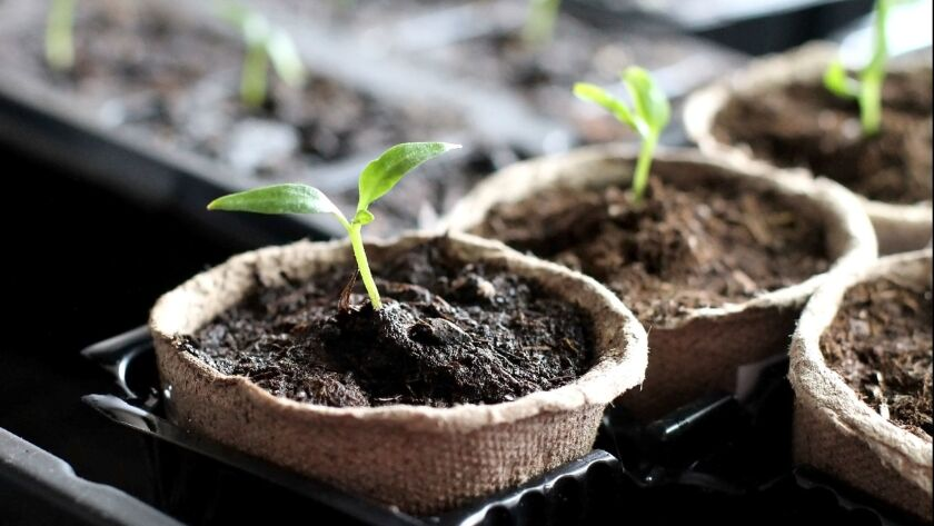 You can start seeds for warm-season vegetables by the middle of February.