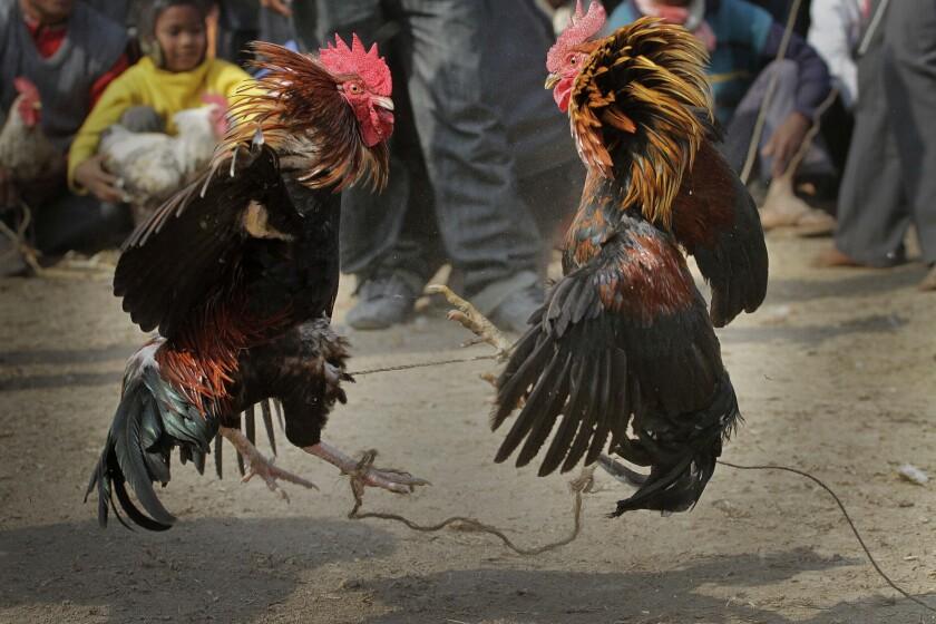 Fotografía de archivo del 21 de enero de 2011 de personas viendo una pelea de gallos